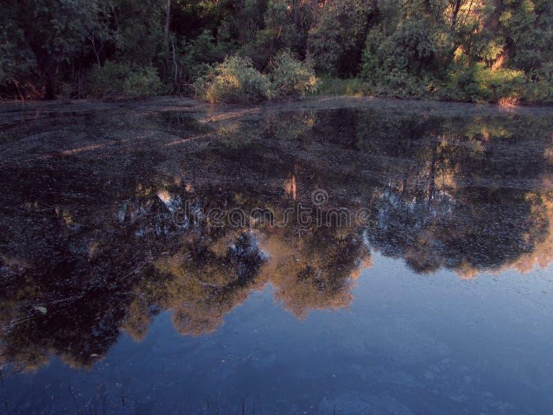 Яркое отражение неба и прибрежных зеленых кустов в болотистой темной воде небольшого озера леса стоковые фотографии rf
