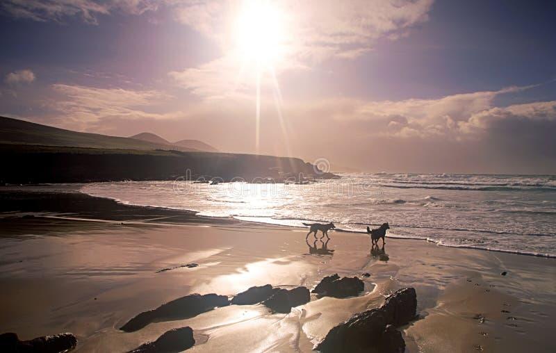 Download яркое солнце стоковое изображение. изображение насчитывающей океан - 6869855