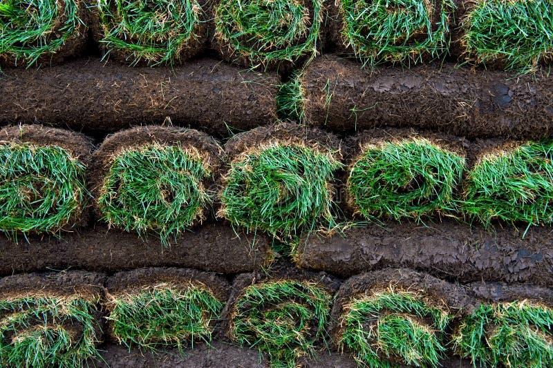 ярко - зеленый цвет свертывает sod стоковые изображения rf