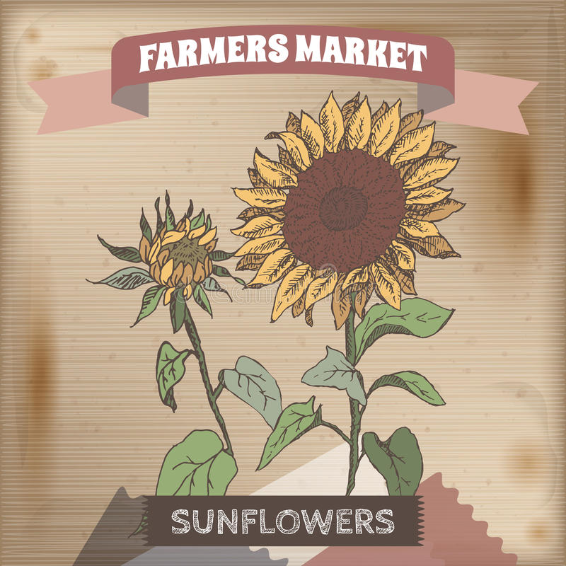 Ярлык рынка фермера с эскизом цвета солнцецвета иллюстрация штока