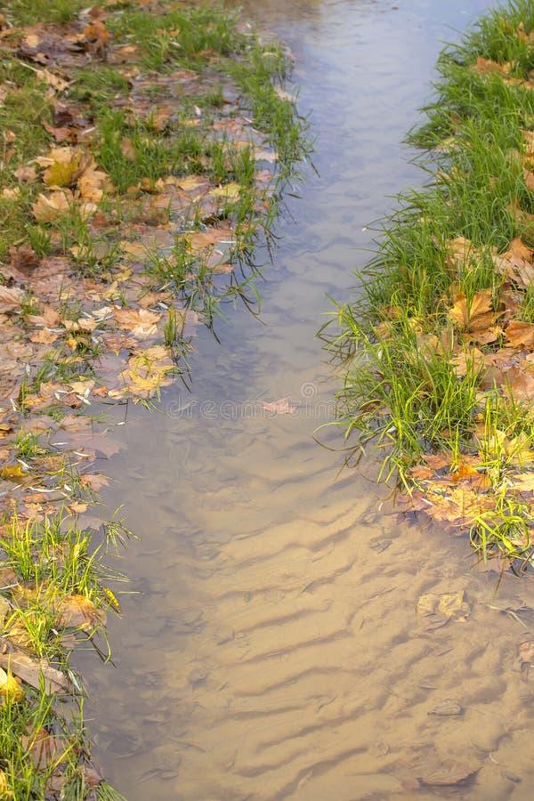 Ясная вода заводи, песочное дно, зеленая трава стоковое изображение rf
