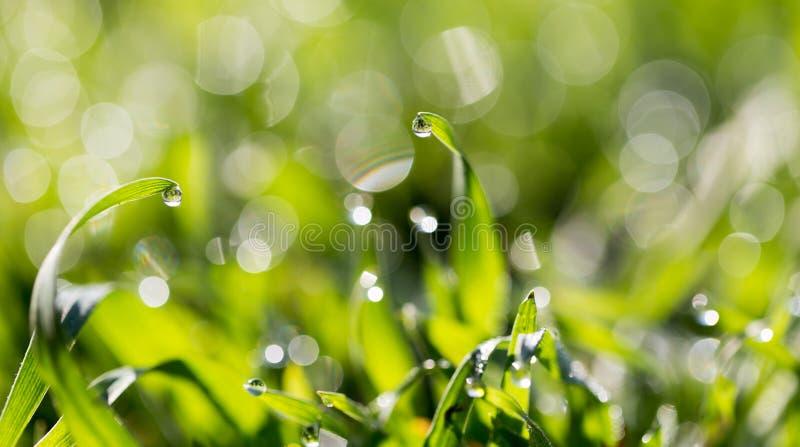 ясная роса dof падает предыдущая экологическая краткость изображения парков природы зеленого цвета травы оплакивая стоковая фотография