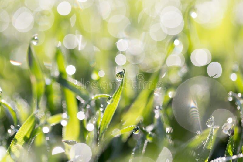 ясная роса dof падает предыдущая экологическая краткость изображения парков природы зеленого цвета травы оплакивая стоковые фото