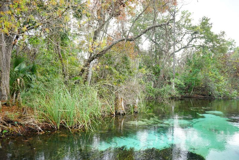 Ясное река стоковые фото