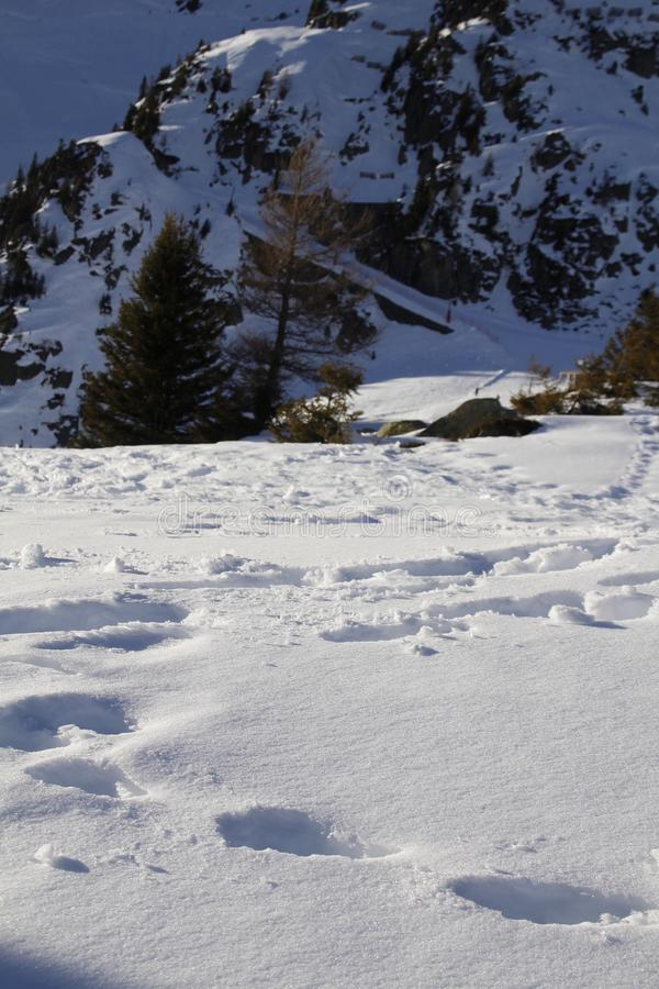 Ясный день в зиме стоковое изображение rf