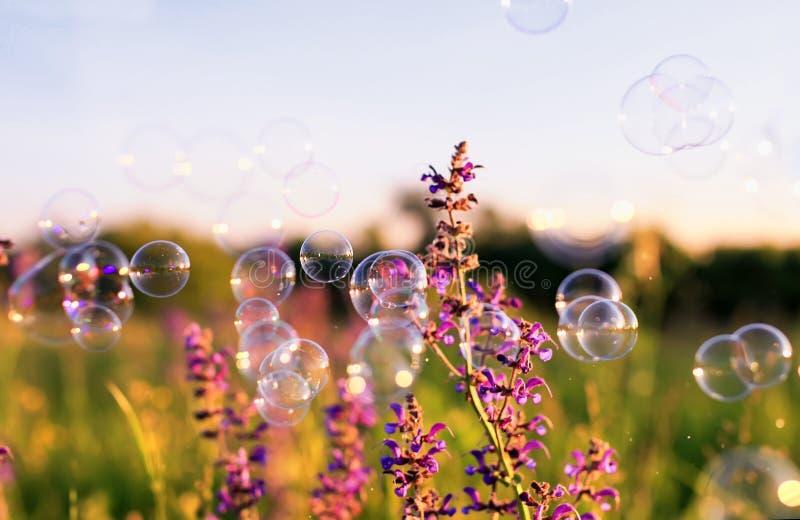 ясный зеленый луг с розовыми цветками и пузырями мыла ярко shimmer и лететь в воздух на заходе солнца стоковое фото