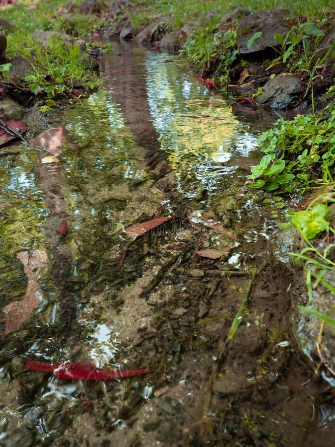 Ясный малый поток свежей воды стоковые фотографии rf