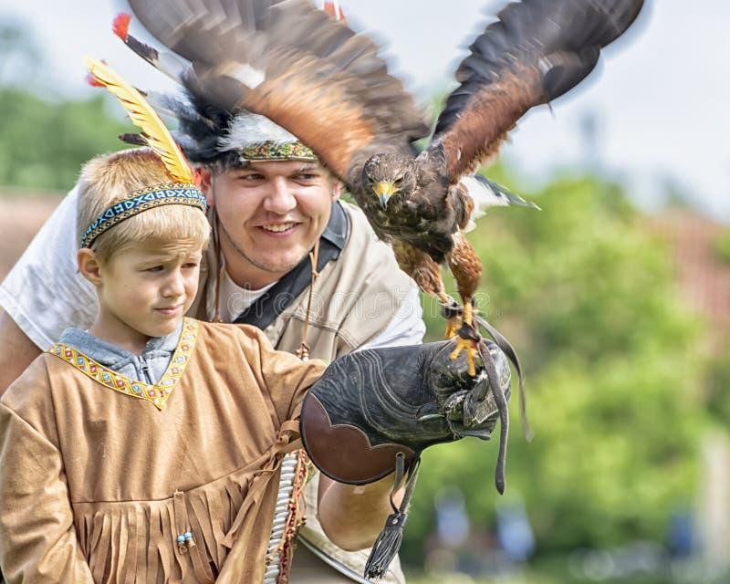 Ястреб Херрис, который залив-подогнали ястреб, средств-большая хищная птица Hawking остался С капюшоном ястреб на руке мальчиков  стоковая фотография