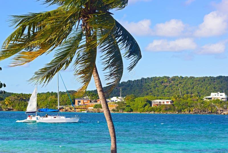 Яхты причаленные на заливе острова St. Thomas около берега с пальмой положения в переднем плане стоковое изображение