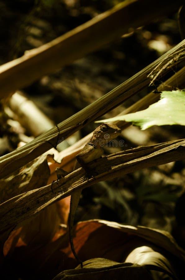 Ящерица в лесе стоковые фото