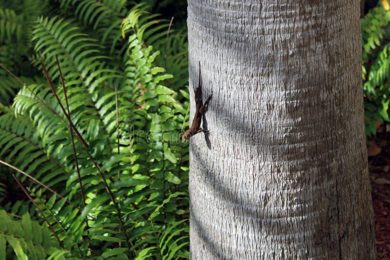 Ящерица дерева на пальме стоковые изображения rf