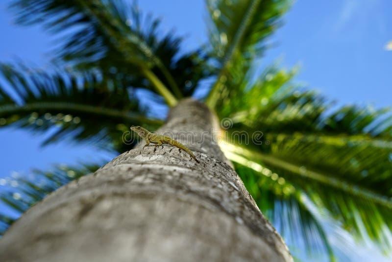 Ящерица на пальме стоковое фото