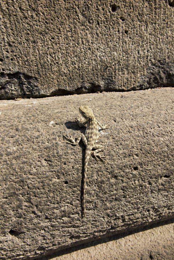проект картинка ящерицы на стене из натурального камня часть города, также