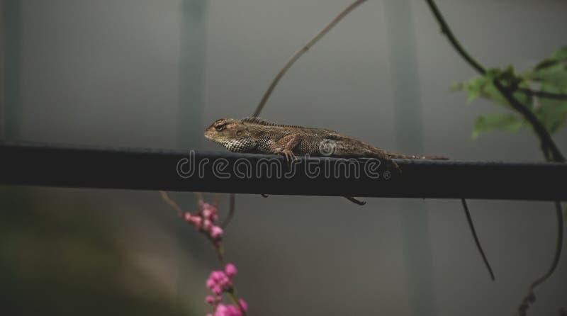 Ящерица охлаждая на линии стоковое фото rf