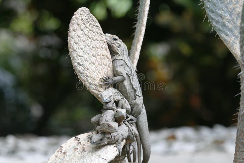 ящерицы стоковое изображение