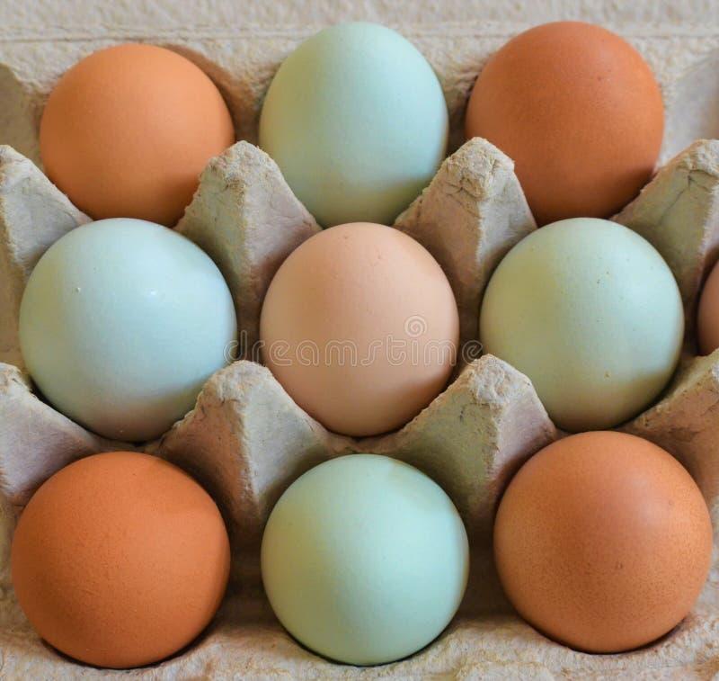 9 яя внутри коробки яйца стоковая фотография