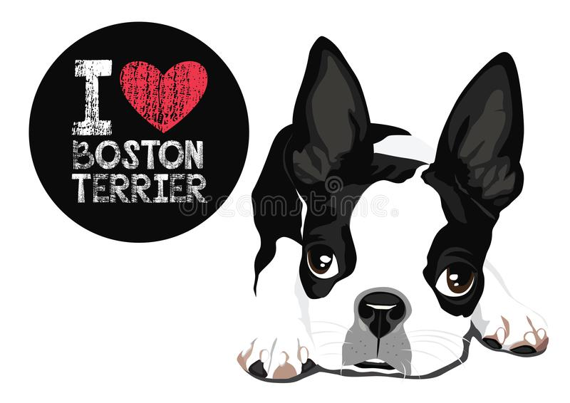 Я люблю вектор терьера Бостона иллюстрация вектора