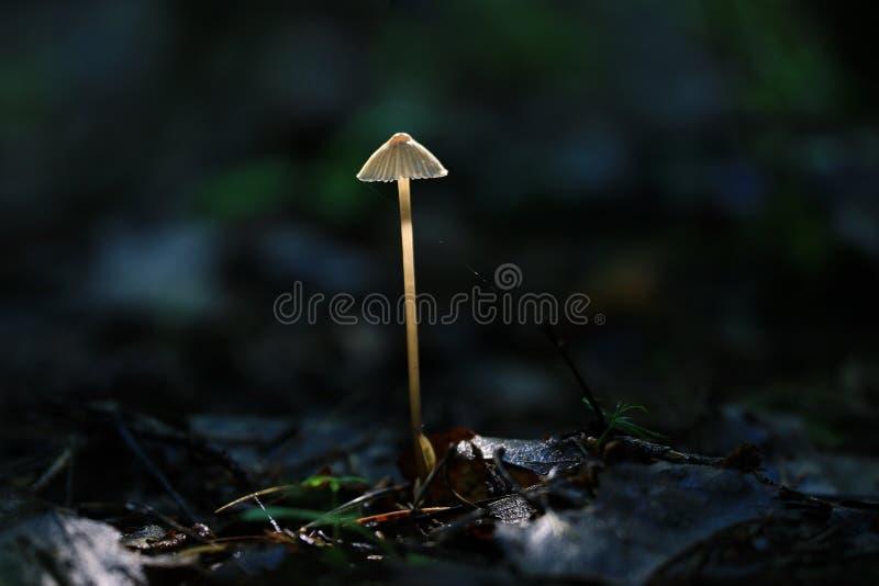 Ядовитый гриб стоковые изображения rf