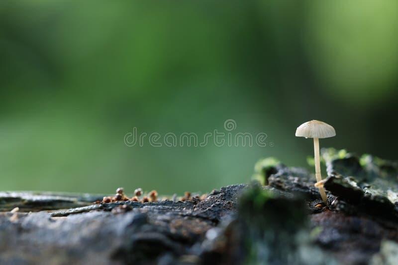 Ядовитый гриб стоковое изображение
