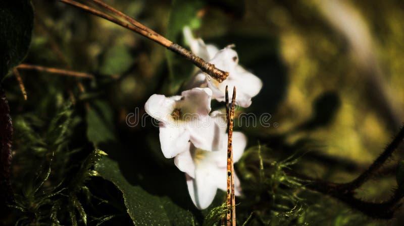 Я сфотографировал цветков стоковая фотография