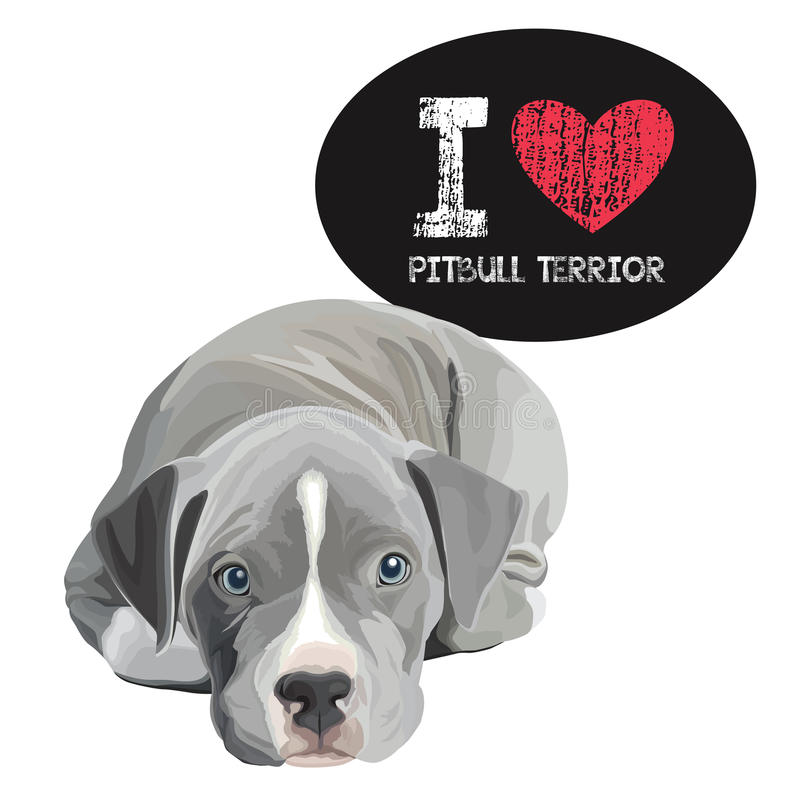 Я люблю Pitbull Terrior иллюстрация штока