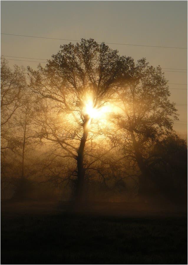 '在树后的充电的'日出 库存照片