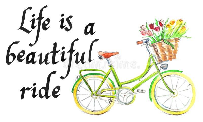 '生活是美好的乘驾'有花-手拉的水彩例证篮子的浅绿色的自行车  库存例证