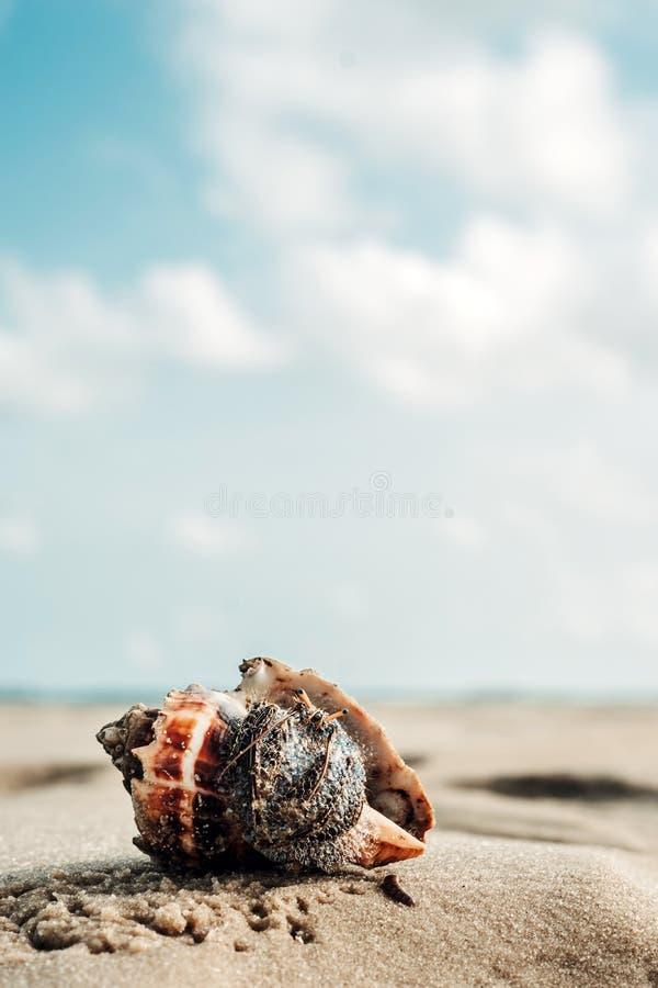 'Eu estou pronto para meu fim acima! 'diz o caranguejo de eremita imagem de stock royalty free