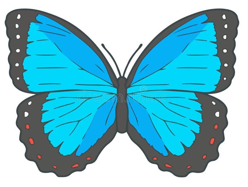 'Peleides蓝色Morpho'蝴蝶的传染媒介例证 向量例证