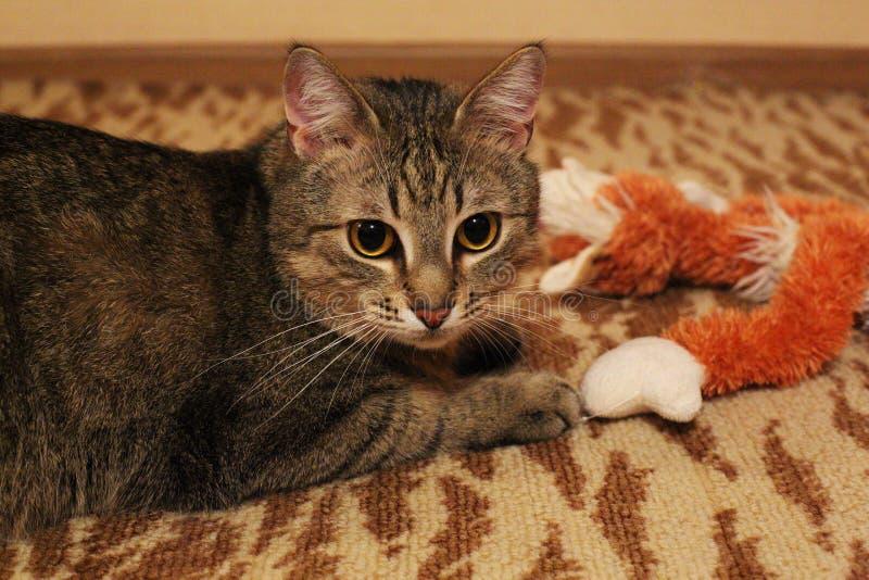 'del ¾ Ñ de КРdel gato imagen de archivo libre de regalías