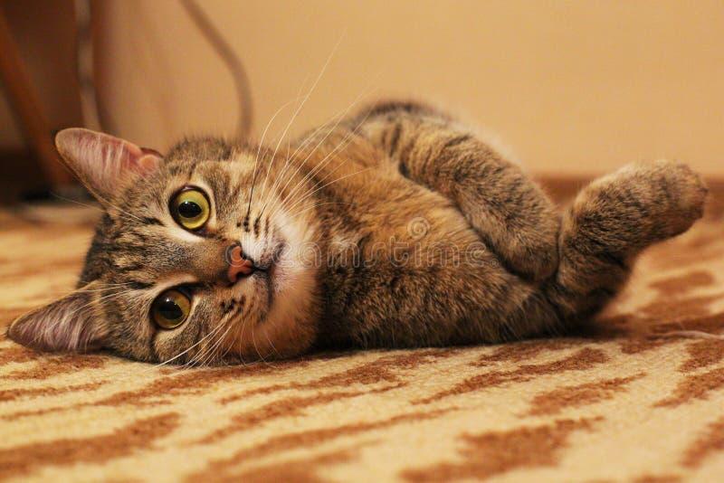 'del ¾ Ñ de КРdel gato imágenes de archivo libres de regalías