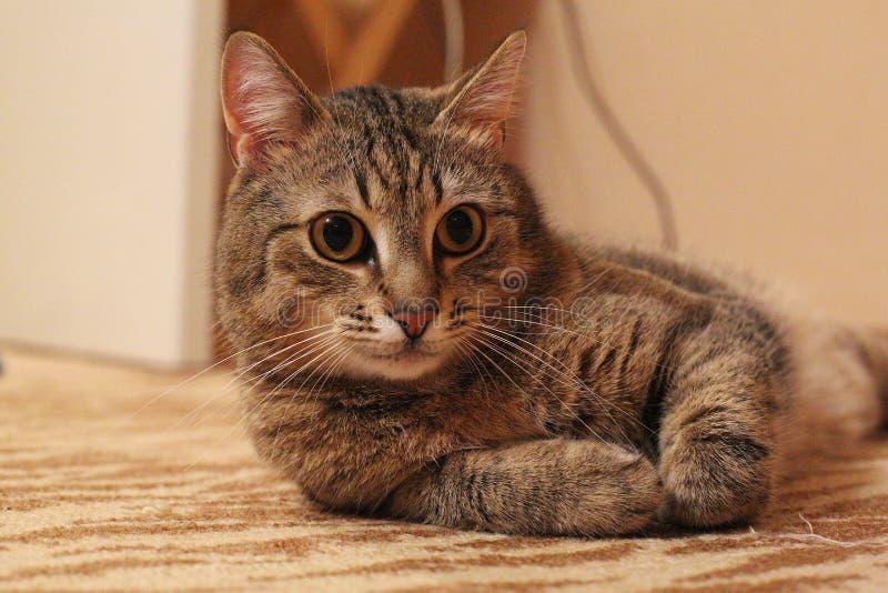 'del ¾ Ñ de КРdel gato fotografía de archivo