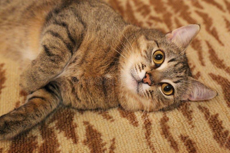 'del ¾ Ñ de КРdel gato imagenes de archivo