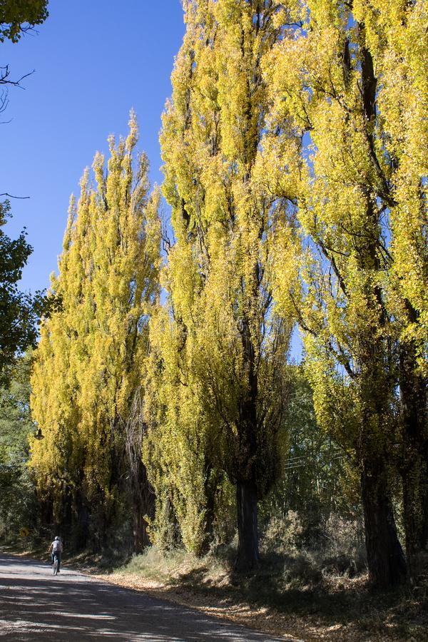 'mendoza, Argentinië , 18 April, 2011: landweg met bomen ` stock afbeelding