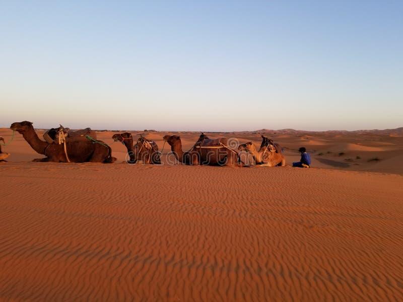 """""""Pausa caffè """"in deserto del Sahara fotografia stock"""