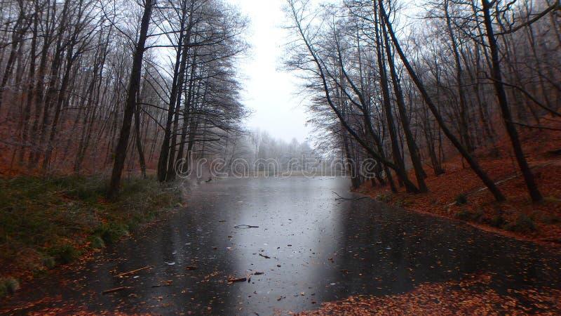 ‰ De à gervölgy en invierno fotografía de archivo