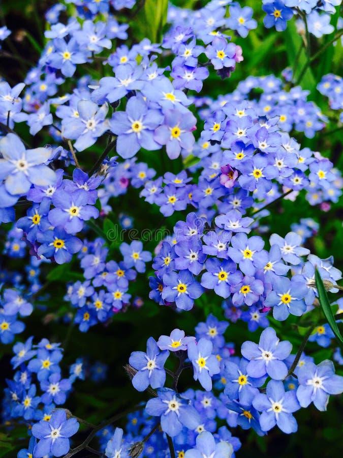 ‹del 'Ñ del ² Ð?Ñ del † Ð de las flores Ñ foto de archivo libre de regalías