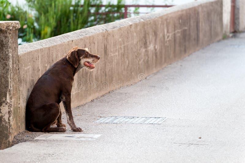 ‹Só do †do ‹do †do cão disperso na rua imagens de stock