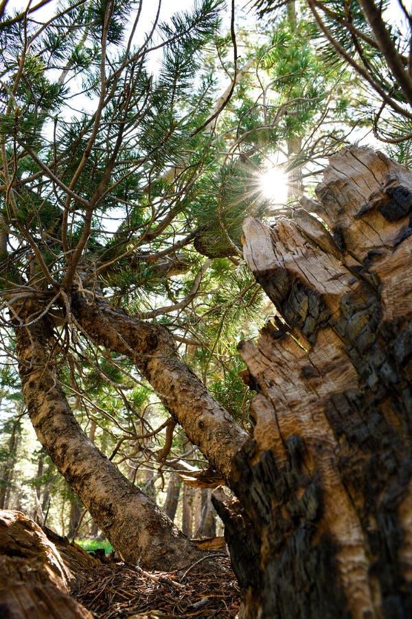 《树的重生》 库存图片