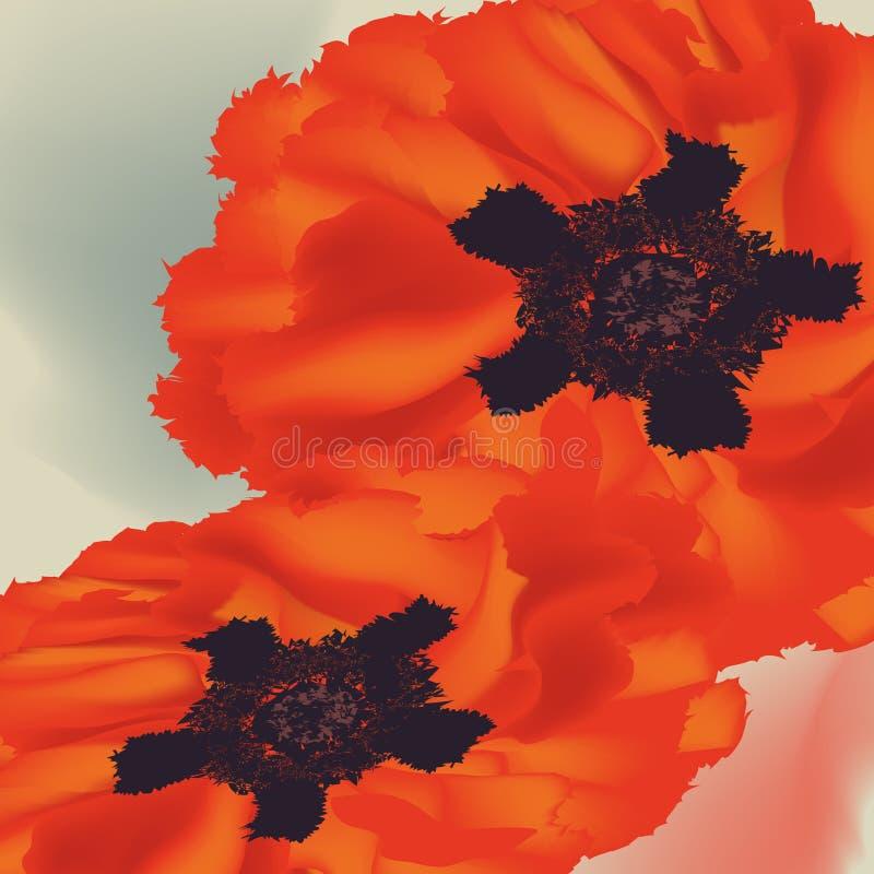 《漂亮罂粟的画像》 库存照片