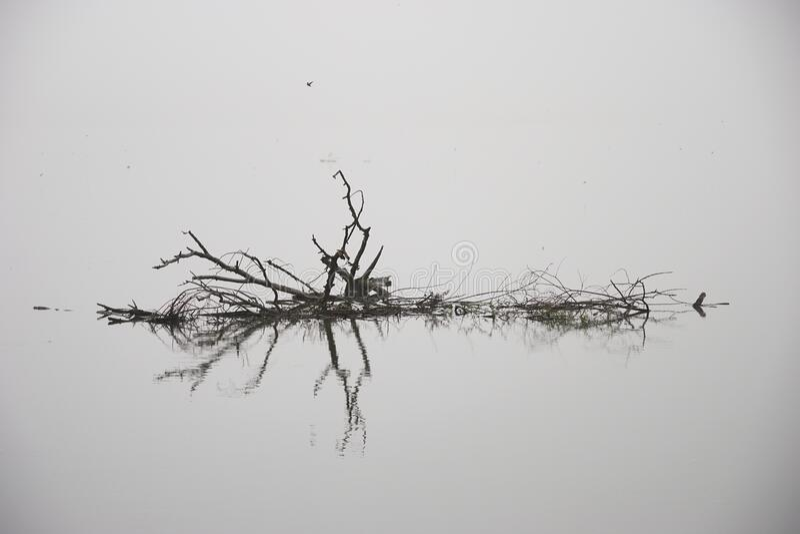 《秋雾湖记》 库存照片