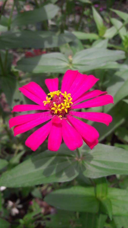 《粉红美丽》 图库摄影