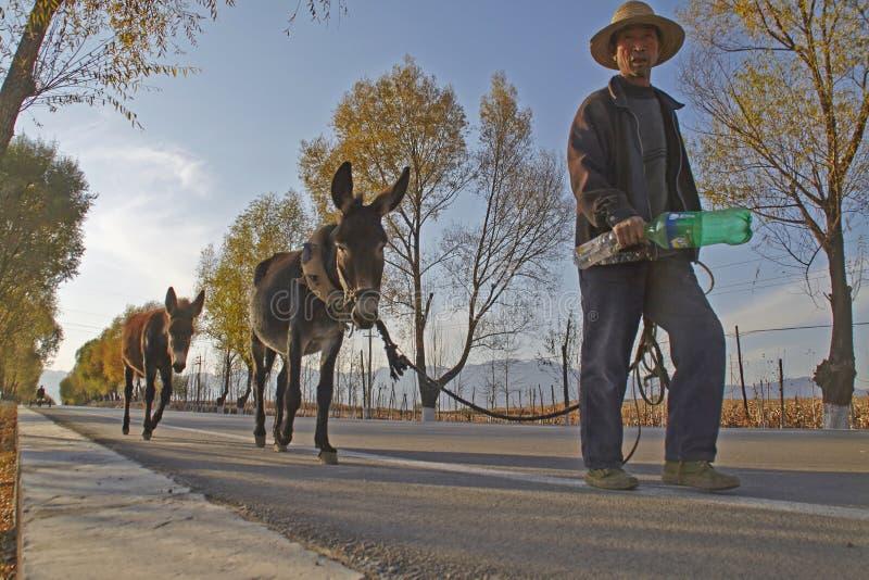一个中国老人和他的驴 图库摄影