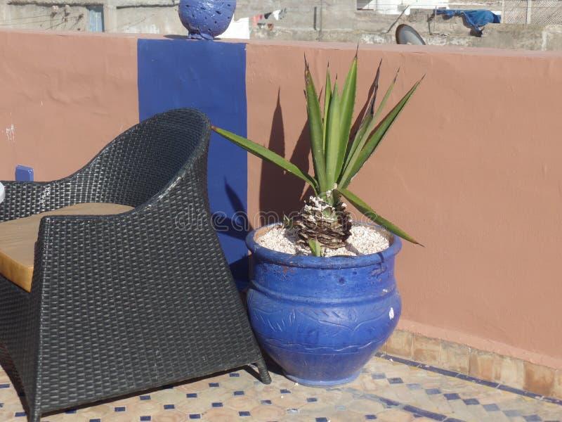 一个五颜六色的罐的仙人掌植物在摩洛哥屋顶大阳台 免版税库存照片