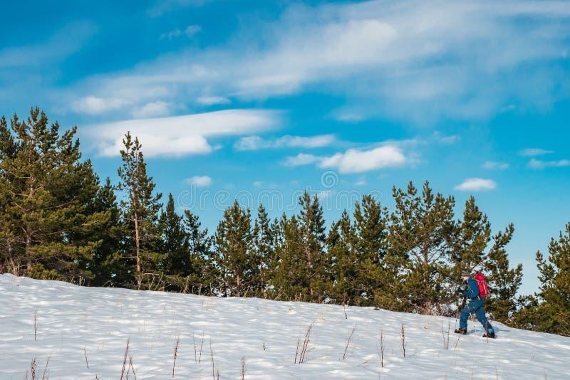 一个人参与skituring在分裂雪板运动 一个人走反对云杉的森林背景  免版税库存照片