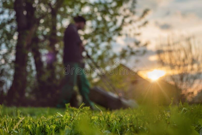 一个人在清早割有一台割草机的草坪在后院 图库摄影