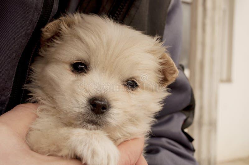 一个人暂挂的可爱的小狗 库存图片