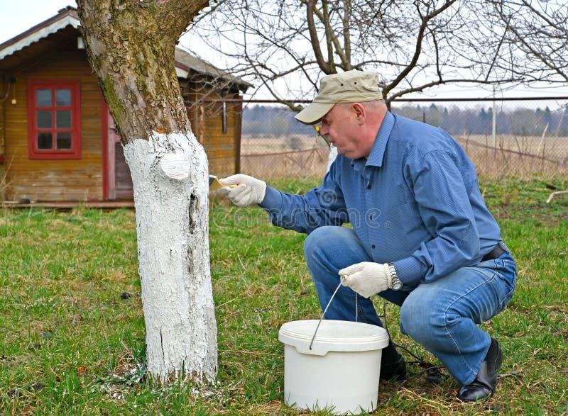 E 一个人白色苹果树的树干 免版税库存照片