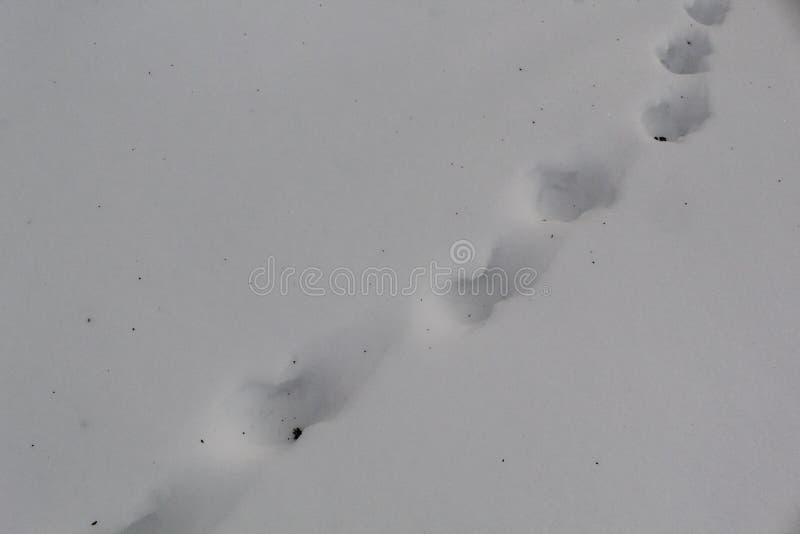 一个人的踪影白色雪的 免版税库存图片