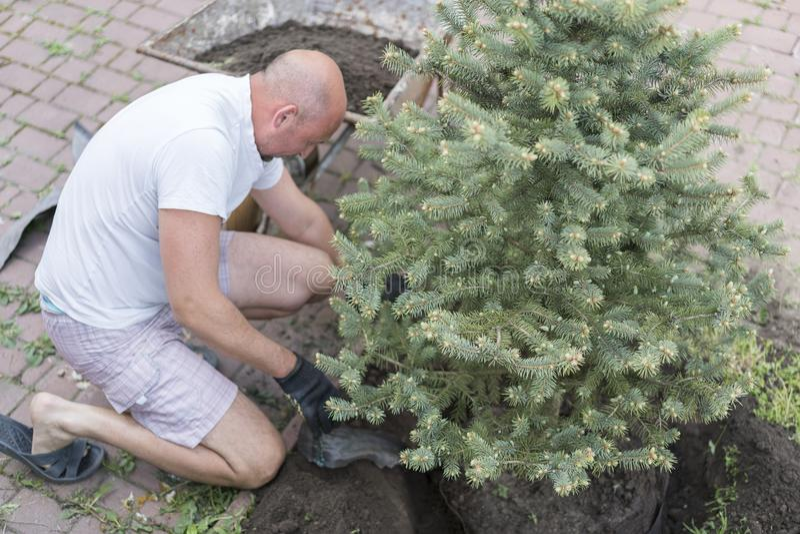 一个人种植一棵圣诞树 种植在淤泥的土壤的人小圣诞树研与赤手和科学实验室烧杯 库存图片